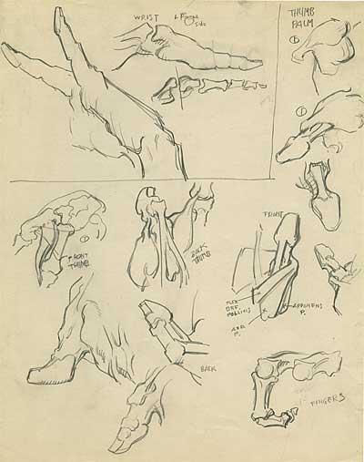 Natwick Anatomy Studies