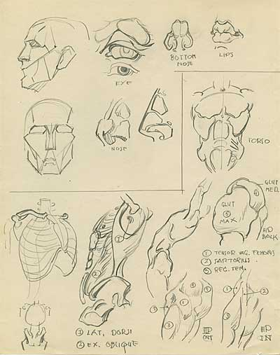 Natwick Anatomy Studies