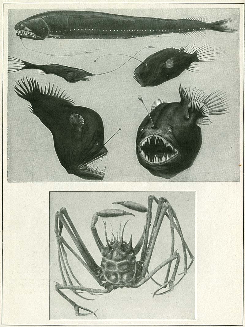 theory: organic shapes- ernst haeckel's art forms in nature
