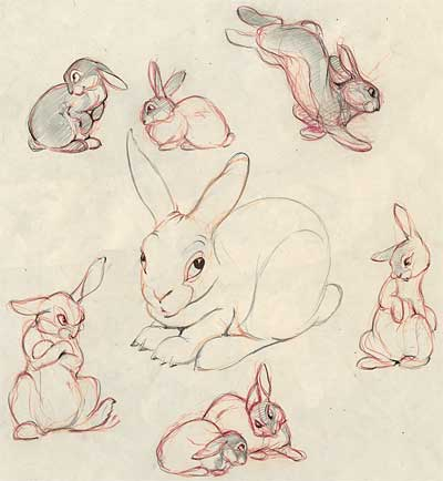 Clair Weeks Animal Studies