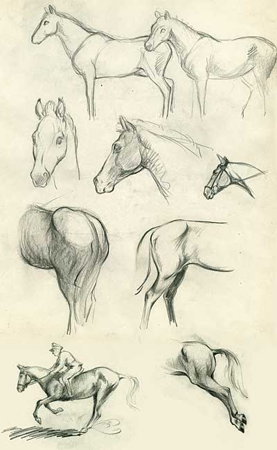 Clair Weeks Animal Studies